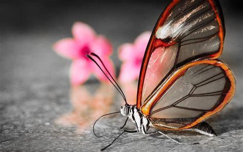 butterfly wallpaper desktop wallpapertag