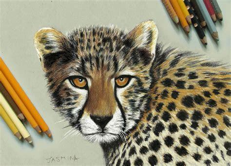 young cheetah colored pencil drawing  jasminasusak