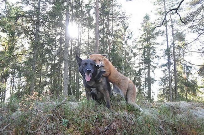 amizades-incomuns-com-animais-3