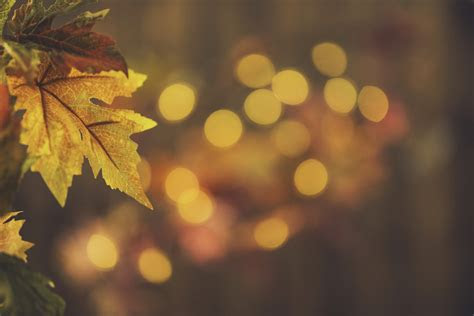 fall backgrounds rustic  life  leaves  bokeh