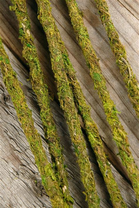 SuperMoss Moss Covered Stakes, Green, 19 Inch Height (Pack