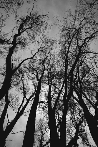 twisty-tree-silhouettes