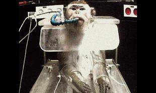 Trouvez-vous acceptable d'expérimenter sur des primates pour mieux comprendre le fonctionnement du vivant ?