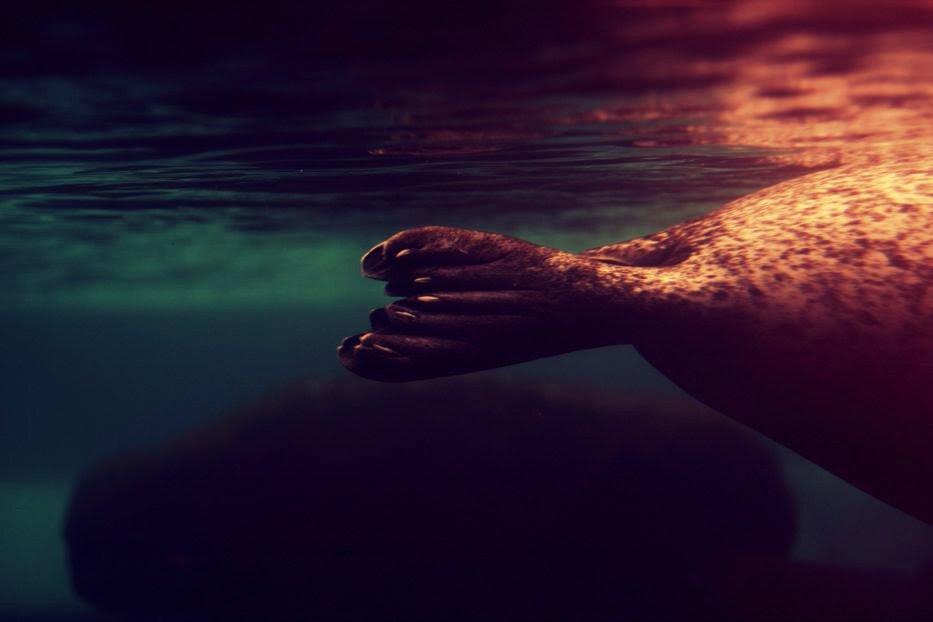 in liquid dreams
