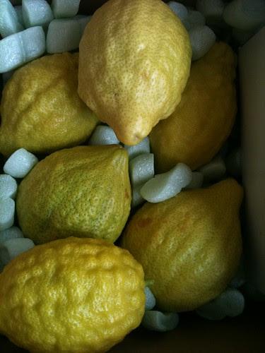 California grown Citrons!