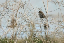 Apprendre et comprendre les chants d'oiseaux