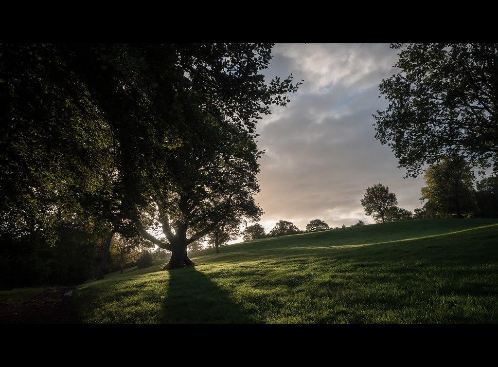Ireland shadows