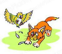 Gato a tentar apanhar o pássaro