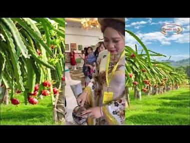 Hoa hậu Vân Anh thưởng thức Nước ép Phúc Hà trong Chương trình từ thiện...