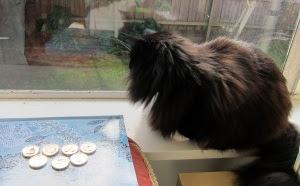 battle-frontier-cat