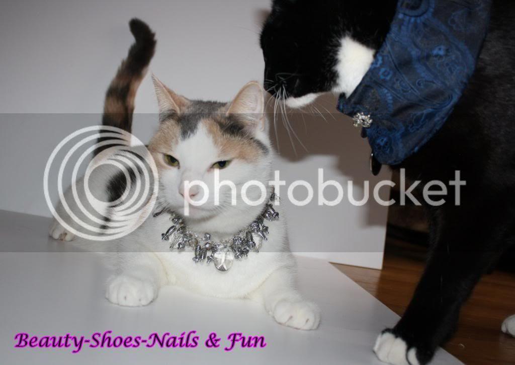 photo Meowmmys6_zps06b2c470.jpg