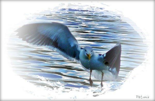 Fri som fuglen 4 a