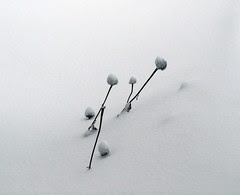 Seed Heads in Snow