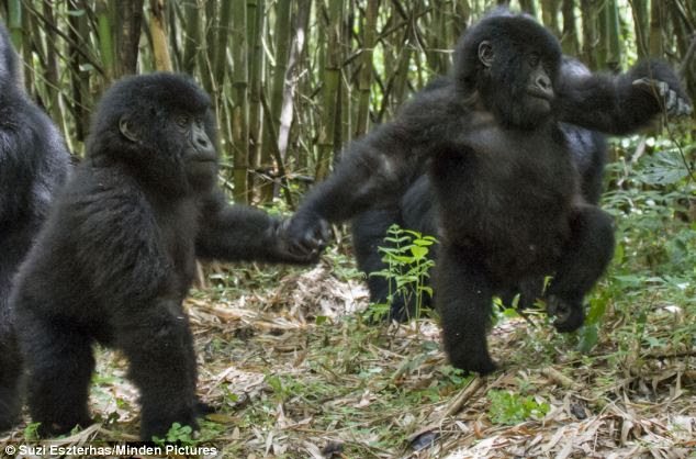 Let's go exploring: Hand-in-hand, Isango and Isangano discover the delights of their forest home