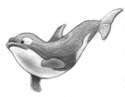 Ilustraciones Orca A Lápiz Piuley Blog