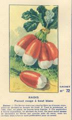 legume72 radis