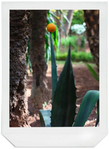 cactus-orange