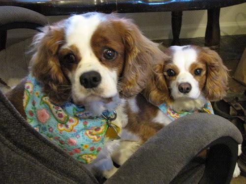Hi doggies.