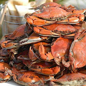 Crabs: Abundant this year!