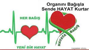 Belirli Günler Ve Haftalar Organ Bağışı Ve Nakli Haftası 3 9 Kasım