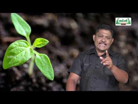 முப்பரிமாணம் Std 12 TM Bio Botany தாவர திசு வளர்ப்பு Part 02 Kalvi TV