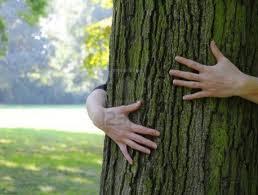 Résultat d'images pour embrasser les arbres