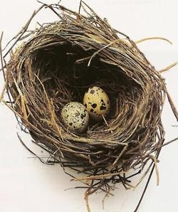 #novemberphotochallenge  Day 26: two. Two eggs in a nest.