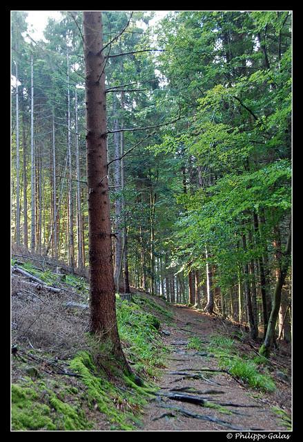 Eclairage forestier