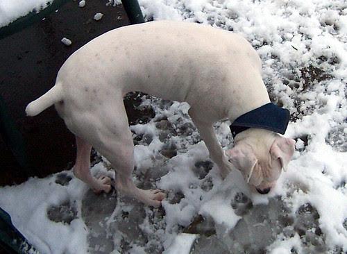 snowdogs0006