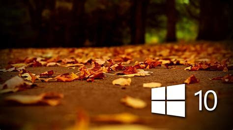 White windows 10 logo on autumn red leaves