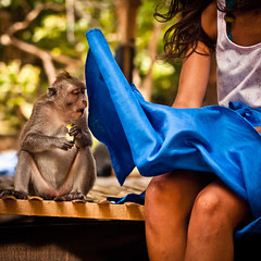 The monkey who saw too much (Part 2/4), Pura Luhur Uluwatu - Bali