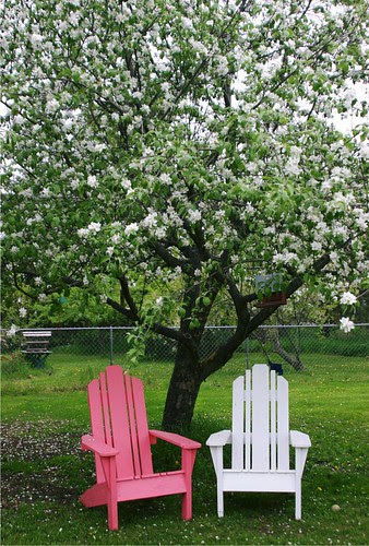Pink and White Chairs Under the Apple Tree