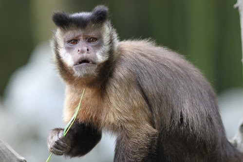 Funny Monkey Face This