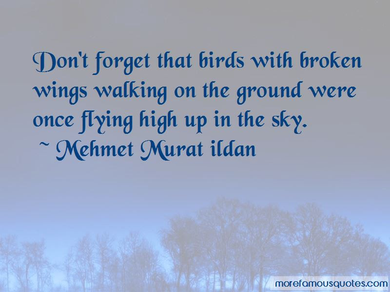 Flying With Broken Wings Quotes Top 2 Quotes About Flying With