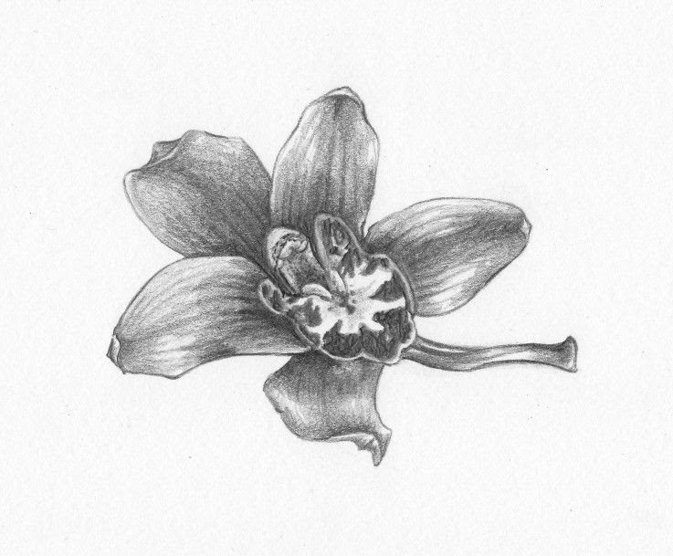 Grey And White Orchid Flowers Tattoo Design