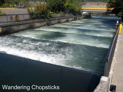 Day 4.1 Bonneville Lock and Dam - Cascade Locks - Oregon 8