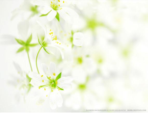 desktop backgrounds flowers