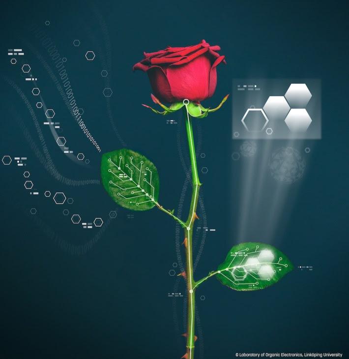 rosas-electrónicos