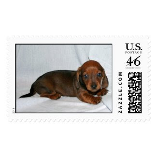 Dark Red Dachshund Puppy Postage Stamps