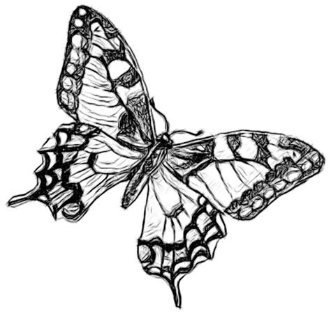 drawing pencil  charcoal art galleries butterfly
