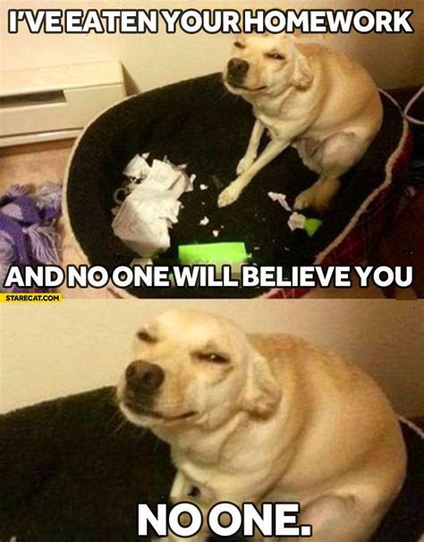 I?ve eaten your homework and no one will believe you dog