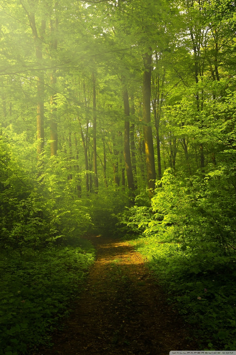Beautiful Nature Image Green Forest ❤ 4K HD Desktop Wallpaper