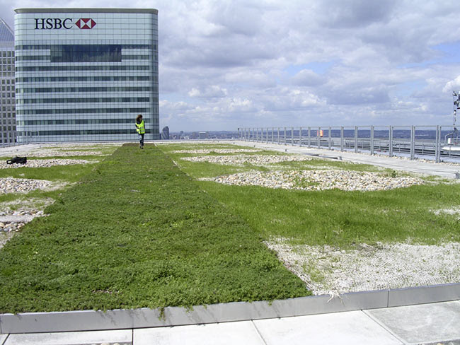Barclay green roof