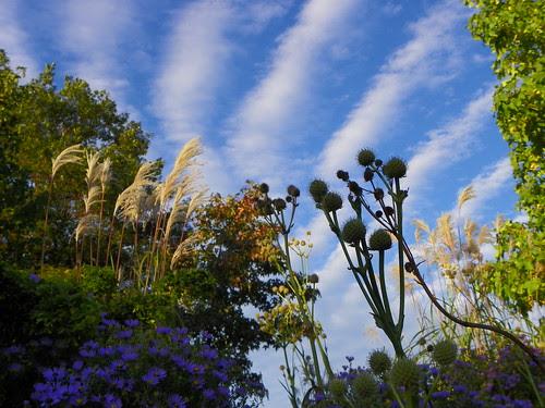 Chicago Botanic Garden (100)