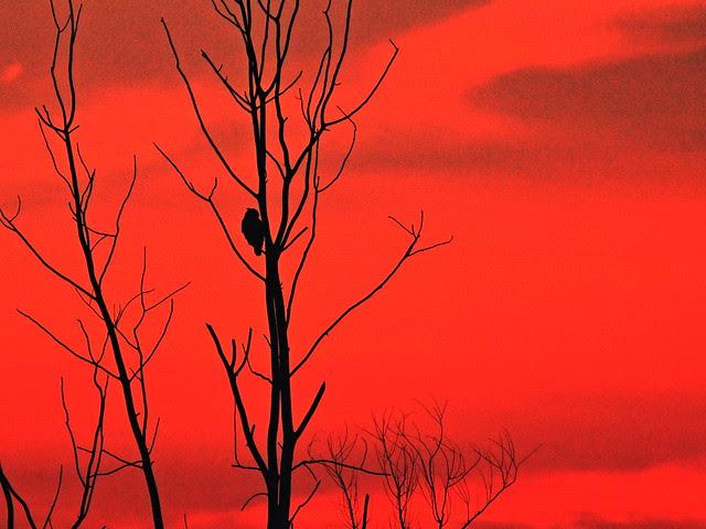 Owl at sunset 20130906