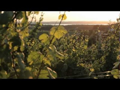 VIDEO: Michigan Wineries from Pure Michigan