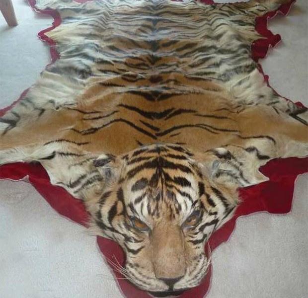 Pele de tigre usada para produzir tapete; mercado de luxo chinês ameaça animais (Foto: Reprodução/EIA)