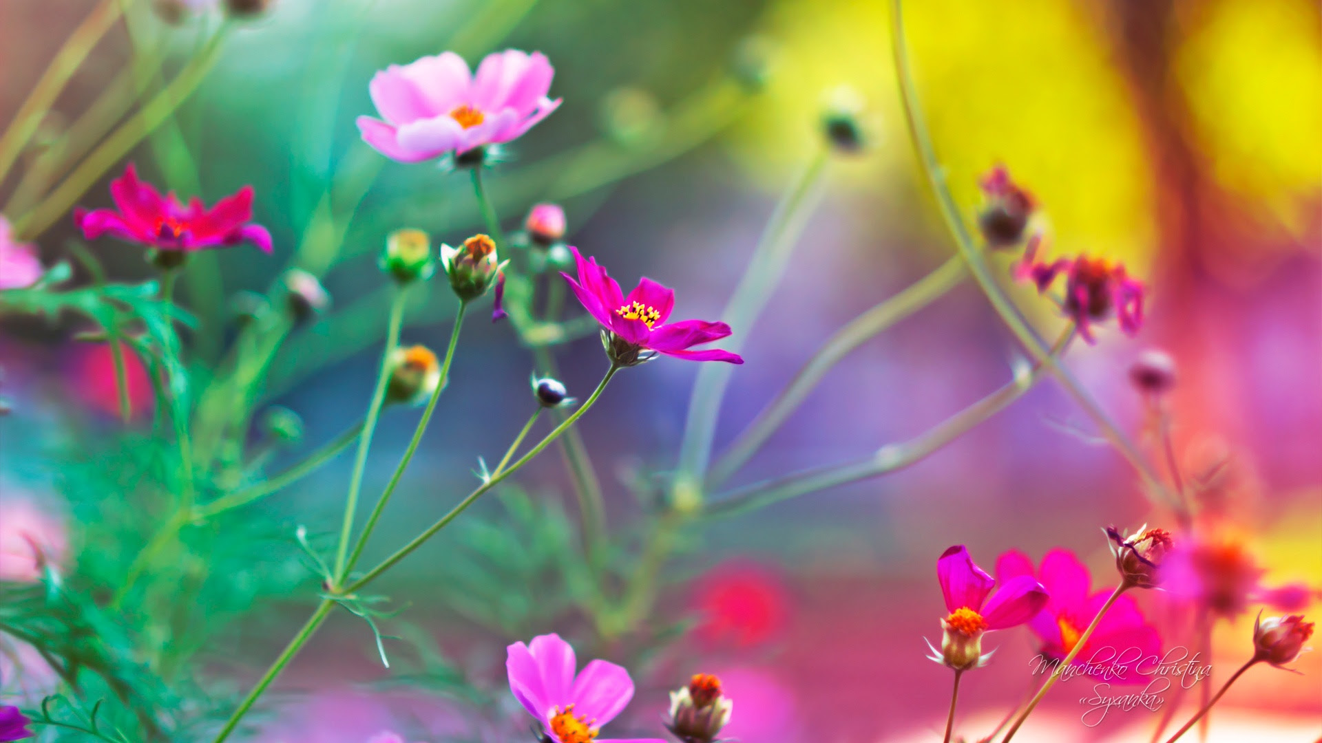 Flowers Wallpaper Hd 1080p Free Download For Mobile