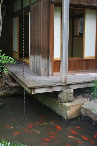 japanese garden teahouse and koi