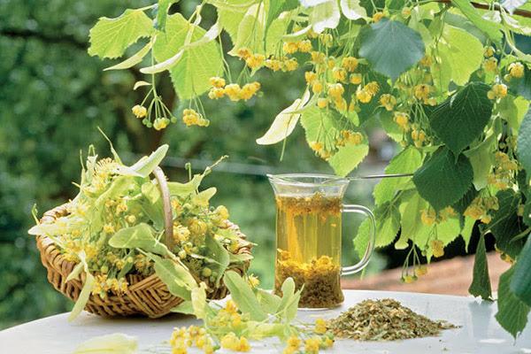 Травы при простуде, травы от простуды, какие травы при простуде, травы при простуде детям, травы при простуде беременным, какие травы пить при простуде, способы приема травы от простуды, настой лекарственных трав, отвар лекарственных трав, настойка лекарственных трав, чай из лекарственных трав